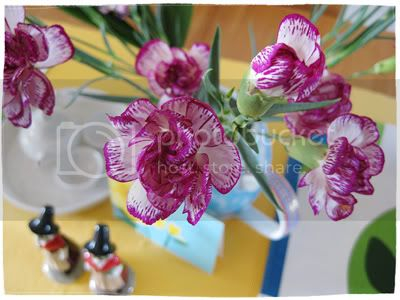 spray_carnations