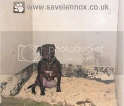 Lennox Locked Up In His Inhumane Concrete Council Prison